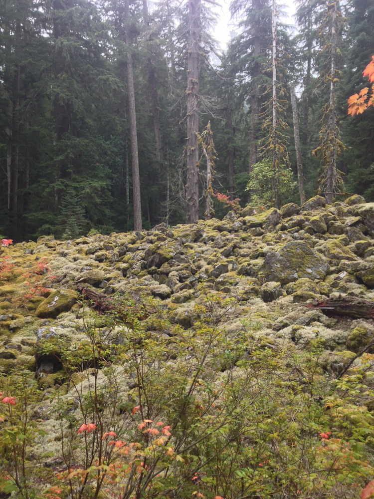 moss covering an old rock slide