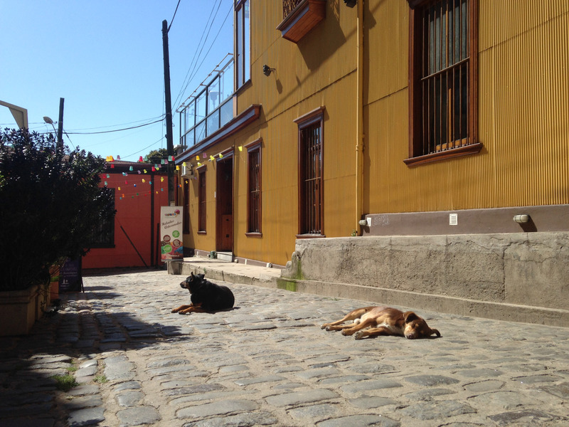 dogs sleeping in the street